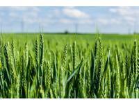 куплю пшеницу с элеватора казахстан